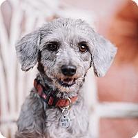 Adopt A Pet :: Pepper - Portland, OR