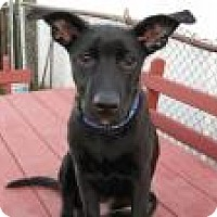 Adopt A Pet :: Pete - Marlton, NJ