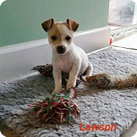 Adopt A Pet :: Lawson - Gainesville, FL
