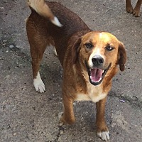 Beagle Mix Dog for adoption in Acworth, Georgia - Sarge