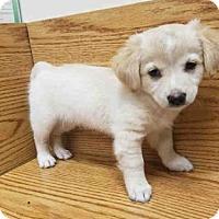 Adopt A Pet :: A009223 - Rosenberg, TX