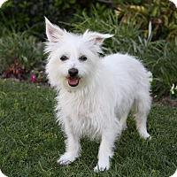 Adopt A Pet :: DEBBIE - Newport Beach, CA
