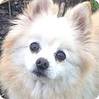 Adopt A Pet :: Buddy - Trenton, NJ