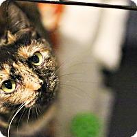 Adopt A Pet :: Dora - Lincoln, NE