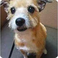 Adopt A Pet :: Gizmo - Gilbert, AZ