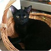Adopt A Pet :: Darren - Sterling Hgts, MI