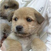 Adopt A Pet :: Aristotle - Glastonbury, CT