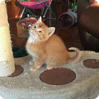 Adopt A Pet :: Leo - Walnut, IA