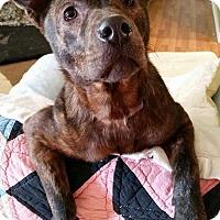 Adopt A Pet :: Holly - Hartsville, TN