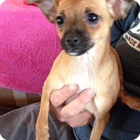 Adopt A Pet :: Piper - The Woodlands, TX