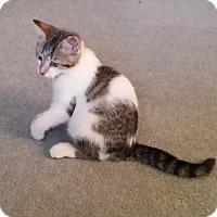 Adopt A Pet :: Freeway - Kirkwood, DE