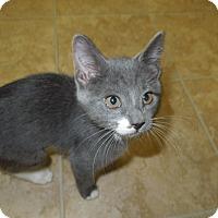Adopt A Pet :: Eve - Medina, OH
