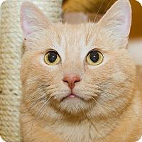Adopt A Pet :: Rafeal - Irvine, CA