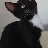 Adopt A Pet :: Wanda - Roseville, CA
