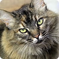 Adopt A Pet :: Coretta - Portland, OR