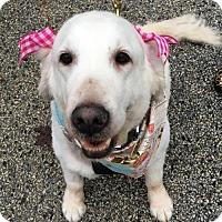 Adopt A Pet :: Lola - Southeastern, PA