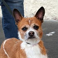 Adopt A Pet :: Chip - Palmdale, CA