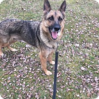 German Shepherd Dog Dog for adoption in Alexandria, Virginia - River