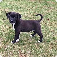 Adopt A Pet :: Riff - New Oxford, PA