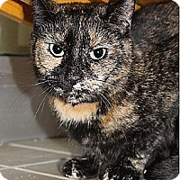 Domestic Shorthair Cat for adoption in New York, New York - Penelope (Westhampton)