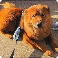 Adopt A Pet :: Noble - Alexandria, VA