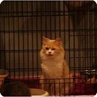 Adopt A Pet :: Sheena - Muncie, IN