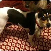 Adopt A Pet :: Cappy - Phoenix, AZ