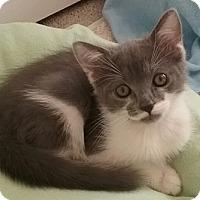 Adopt A Pet :: Morpheus - North Highlands, CA
