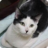 Adopt A Pet :: Oreo - Erwin, TN