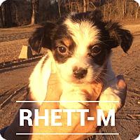 Adopt A Pet :: Rhett - Southington, CT