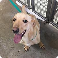Adopt A Pet :: BJ - Buckeystown, MD