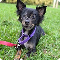 Adopt A Pet :: LEVI - West Palm Beach, FL