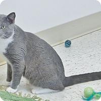 Adopt A Pet :: Wally - Chambersburg, PA