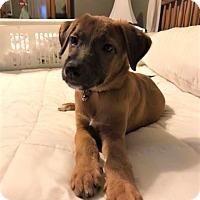 Adopt A Pet :: Jagger - Middlesex, NJ