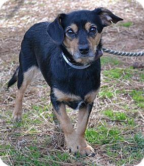 Terrier (Unknown Type, Small) Mix Dog for adoption in Athens, Georgia - Moxie