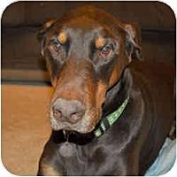 Adopt A Pet :: Magnum - New Richmond, OH