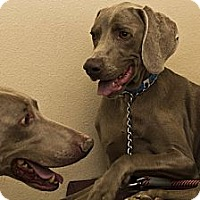 Adopt A Pet :: Oakley and Jimmy - Las Vegas, NV