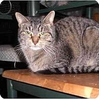 Adopt A Pet :: Carla - Warren, MI