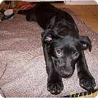 Adopt A Pet :: Kiley - Scottsdale, AZ