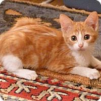 Adopt A Pet :: Portia - Bedford, MA