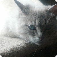 Adopt A Pet :: Talley - london, ON