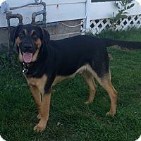 Adopt A Pet :: Astro - Hamilton, ON