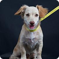 Adopt A Pet :: Jasmine - Nuevo, CA
