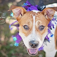 Adopt A Pet :: Charlie - Kingwood, TX