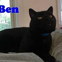 Adopt A Pet :: Ben III - East Stroudsburg, PA