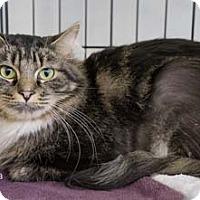 Adopt A Pet :: Eva - Merrifield, VA