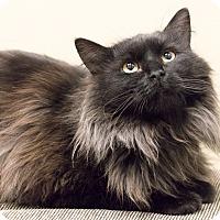 Adopt A Pet :: Patrick - Chicago, IL