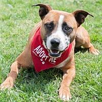Adopt A Pet :: Doby - Salisbury, NC