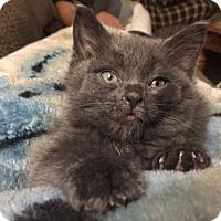Adopt A Pet :: Rory - Hamilton, ON