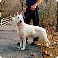 Adopt A Pet :: Grace - Greensboro, NC